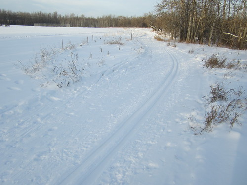 Dec. 2014 The old trail edging the open field along Island 7