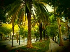 Palmiers de Lisbonne