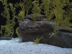 poisson hypocampe chelou Aquarium Lisbonne