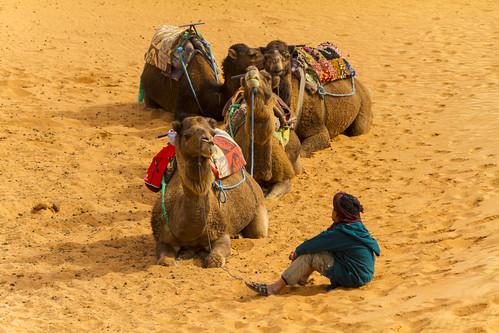 Sahara Kamele