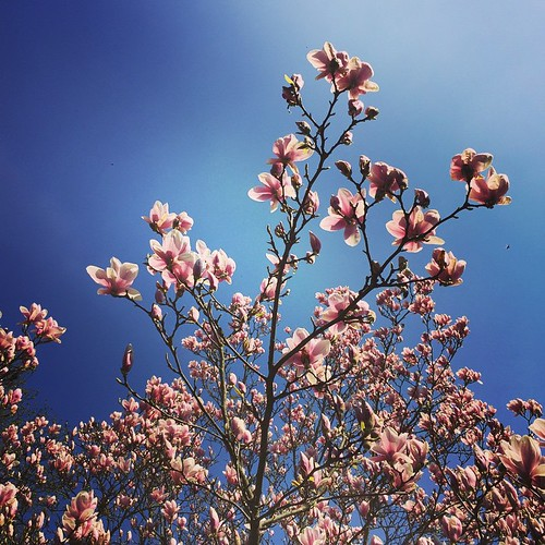 #Magnolia II