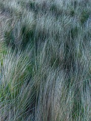 "Dune Grass • <a style=""font-size:0.8em;"" href=""http://www.flickr.com/photos/76977745@N03/27354862510/"" target=""_blank"">View on Flickr</a>"