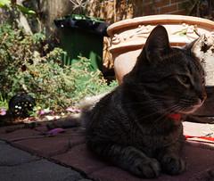 Kitty, la umbră