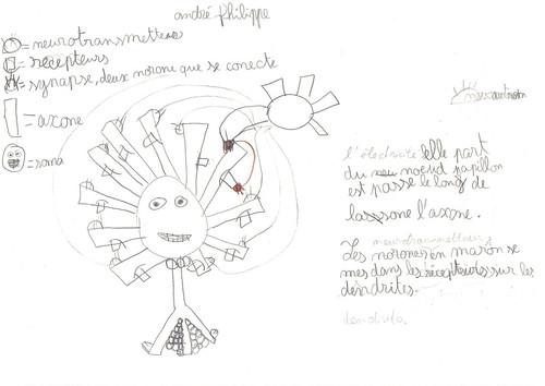 Schéma neurone & communication7