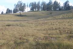 "Pendakian Sakuntala Gunung Argopuro Juni 2014 • <a style=""font-size:0.8em;"" href=""http://www.flickr.com/photos/24767572@N00/27128341006/"" target=""_blank"">View on Flickr</a>"