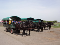 Mata Stud Farm carriage ride tour