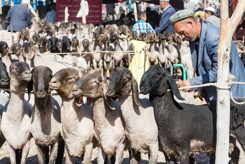 Kashgar Animal Market