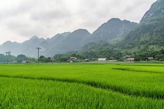 bac son - vietnam 68