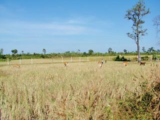 angkor - cambodge 2007 12