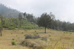 "Pendakian Sakuntala Gunung Argopuro Juni 2014 • <a style=""font-size:0.8em;"" href=""http://www.flickr.com/photos/24767572@N00/26557578363/"" target=""_blank"">View on Flickr</a>"