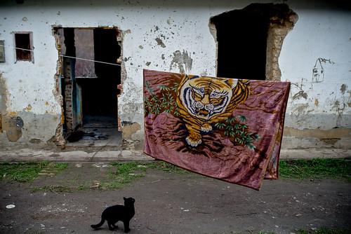 """MMSZ Jelenlét - Pécs, György-telep • <a style=""""font-size:0.8em;"""" href=""""http://www.flickr.com/photos/131963499@N03/18079606751/"""" target=""""_blank"""">View on Flickr</a>"""