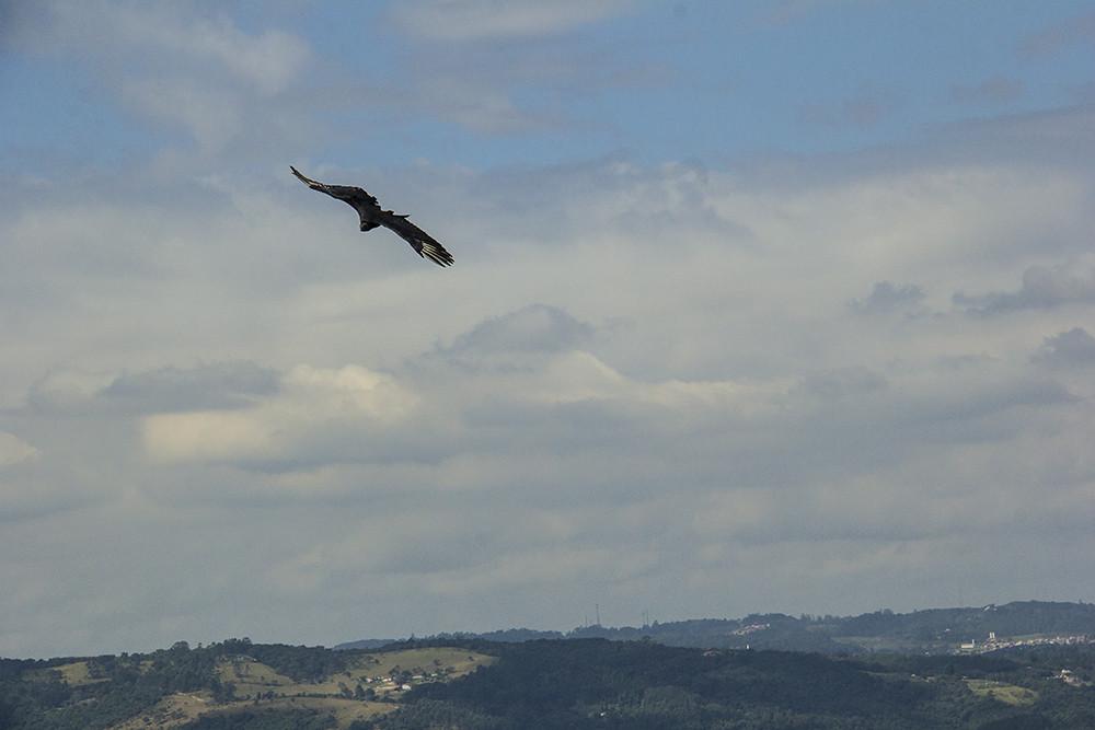 Trilha Morro do Sabóo - pássaro voando perto