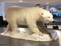 Svalbard-Longyearbyen airport