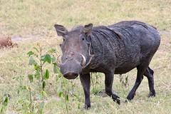 Beauty - Chobe National Park
