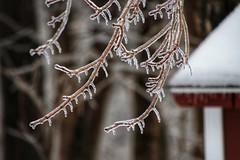 Winter's Glaze