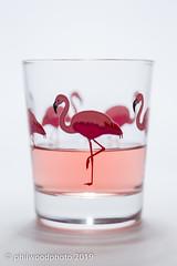 365-2019-048 - Paddling Flamingos