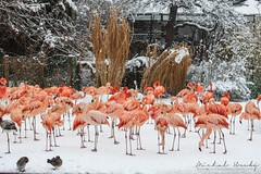 Snow in the Prague Zoo