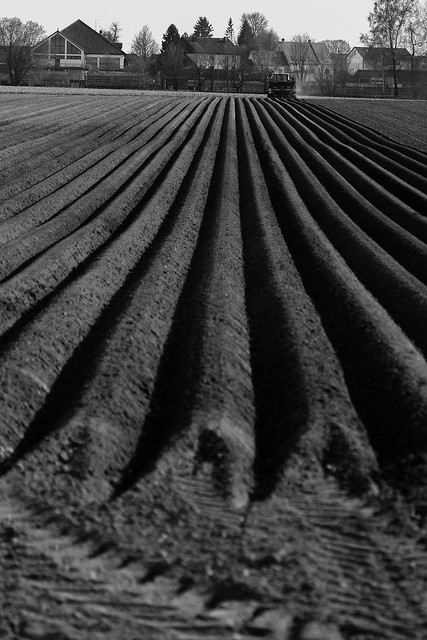 lines of seed