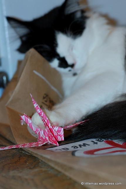kittycrane 11-30-2011 7-13-32 PM