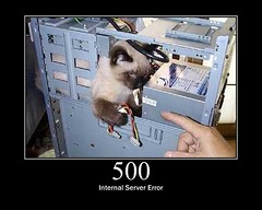 500 LOLCAT INTERNAL SERVER ERROR by GirlieMac on Flickr, CC BY 2.0