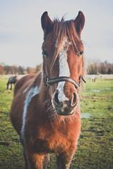 horse 7