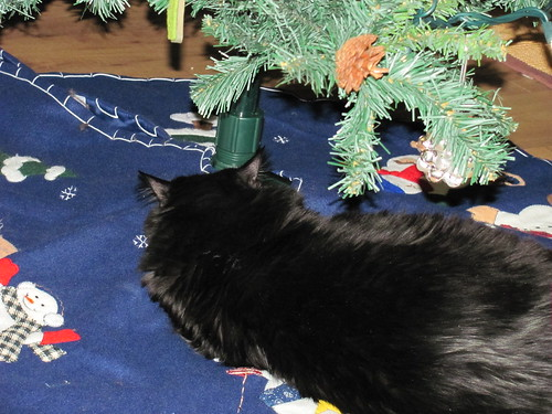 claiming the tree skirt