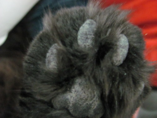 paw pad close up