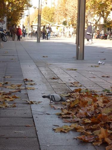 palomo comiendo