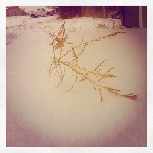 Tumbleweed in the snow.