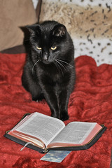 Mischief reads the Bible
