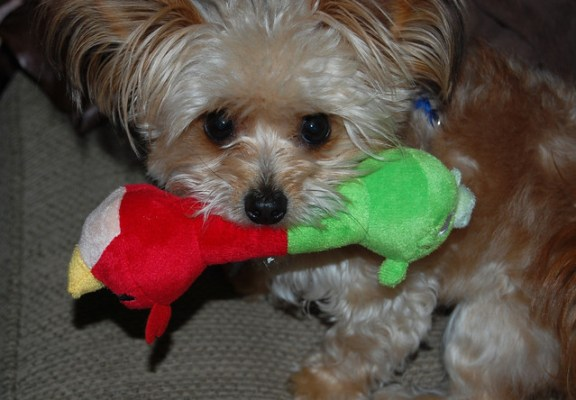 Yum! New Angry Birds dog toy