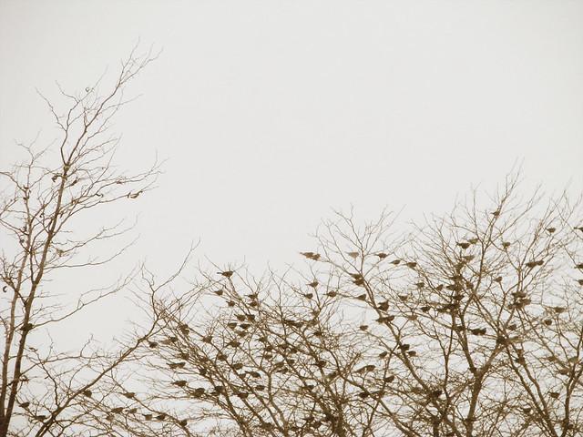 snowy_26