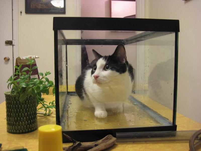 Solomon In Fish Tank; I Caught A Cat Fish