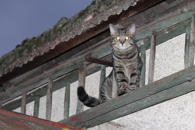 Climbing the social ladder?