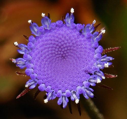 Purplest