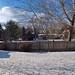 Backyard, January 23, 2012