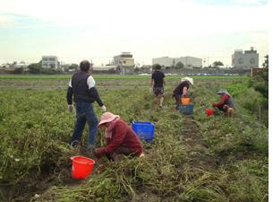 自然農法種花生 瑪莉母女做公益 - 臺灣環境資訊協會