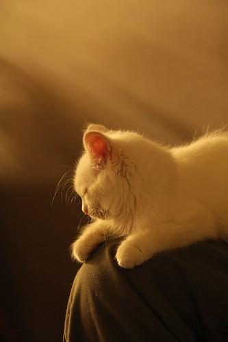 Gesso sleeps