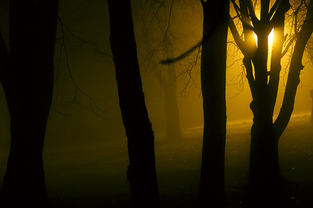 Misty saturday