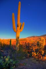 Cactus Tower