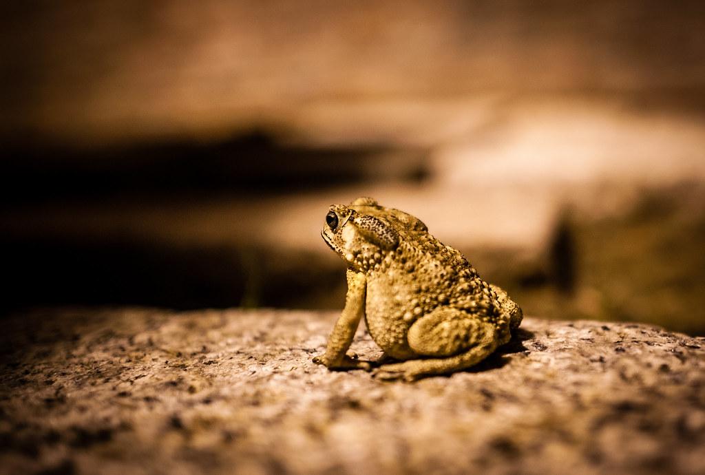 Fort Provintia Toad