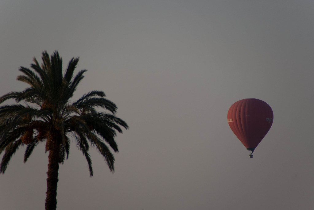Balloon and palm tree