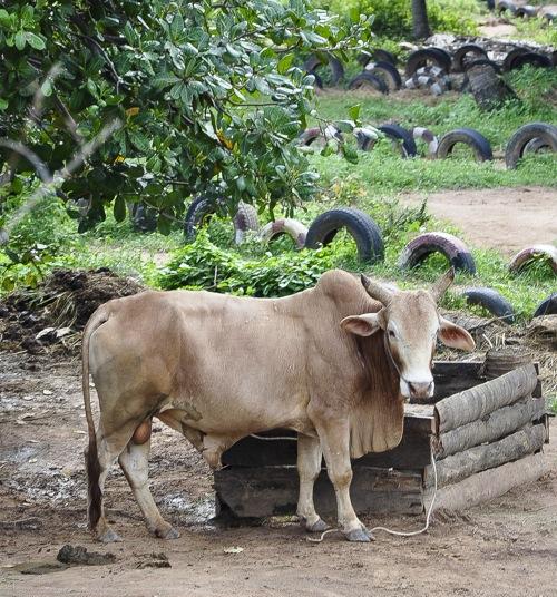 Koh Samui (111 of 116)
