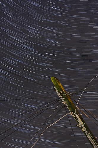 Telegraph Star Trails