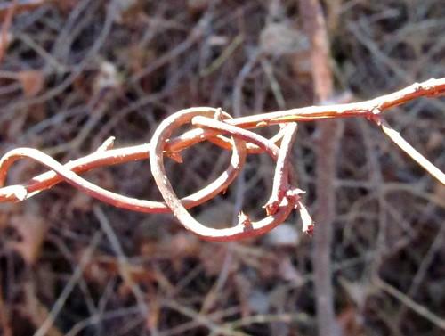 Vining knot