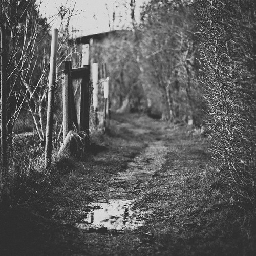a path and a puddle
