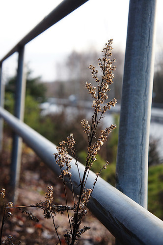 Urban flower by Isoscelez
