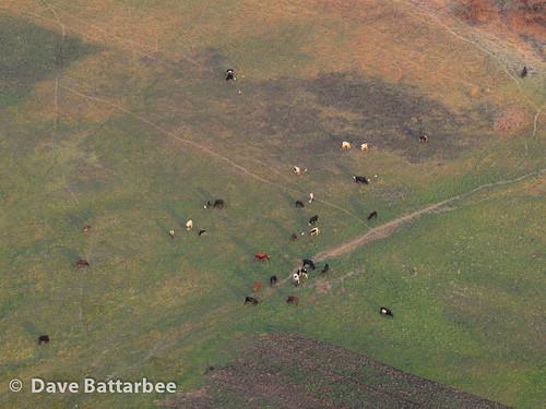 Cattle Herd in the Caprivi Strip