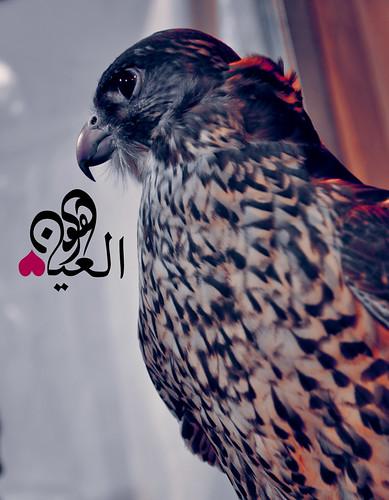 يَرقىّ عَلى متن الهوى #HawaBD by Hawa Alain ♥ @AlAinTHEUAE