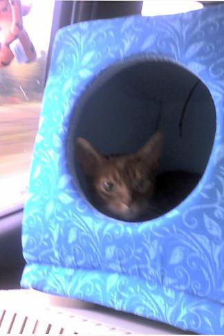 Clancy in Kitty Cube